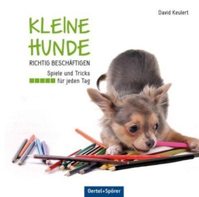 Kleine Hunde richtig beschäftigen - David Keulert  