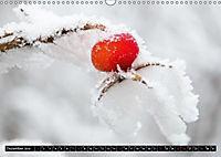 Kleine Welt ganz groß (Wandkalender 2019 DIN A3 quer) - Produktdetailbild 12