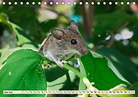 Kleiner Nager - Maus (Tischkalender 2019 DIN A5 quer) - Produktdetailbild 6