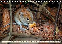 Kleiner Nager - Maus (Tischkalender 2019 DIN A5 quer) - Produktdetailbild 1