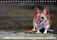 Kleiner Nager - Maus (Tischkalender 2019 DIN A5 quer) - Produktdetailbild 4