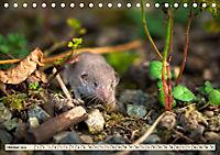Kleiner Nager - Maus (Tischkalender 2019 DIN A5 quer) - Produktdetailbild 10