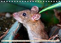 Kleiner Nager - Maus (Tischkalender 2019 DIN A5 quer) - Produktdetailbild 5