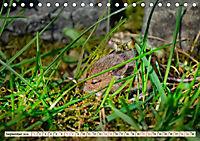 Kleiner Nager - Maus (Tischkalender 2019 DIN A5 quer) - Produktdetailbild 9