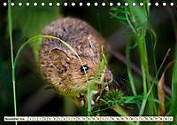 Kleiner Nager - Maus (Tischkalender 2019 DIN A5 quer) - Produktdetailbild 11