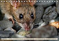 Kleiner Nager - Maus (Tischkalender 2019 DIN A5 quer) - Produktdetailbild 8