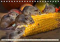 Kleiner Nager - Maus (Tischkalender 2019 DIN A5 quer) - Produktdetailbild 12