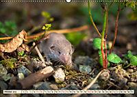 Kleiner Nager - Maus (Wandkalender 2019 DIN A2 quer) - Produktdetailbild 10