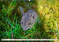 Kleiner Nager - Maus (Wandkalender 2019 DIN A2 quer) - Produktdetailbild 3