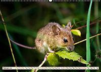 Kleiner Nager - Maus (Wandkalender 2019 DIN A2 quer) - Produktdetailbild 2
