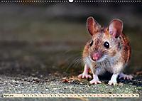 Kleiner Nager - Maus (Wandkalender 2019 DIN A2 quer) - Produktdetailbild 4