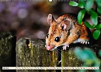 Kleiner Nager - Maus (Wandkalender 2019 DIN A2 quer) - Produktdetailbild 7