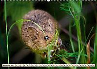 Kleiner Nager - Maus (Wandkalender 2019 DIN A2 quer) - Produktdetailbild 11