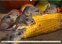 Kleiner Nager - Maus (Wandkalender 2019 DIN A2 quer) - Produktdetailbild 12