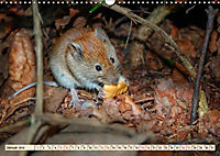Kleiner Nager - Maus (Wandkalender 2019 DIN A3 quer) - Produktdetailbild 1
