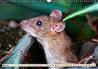 Kleiner Nager - Maus (Wandkalender 2019 DIN A3 quer) - Produktdetailbild 5