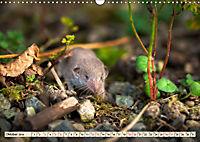 Kleiner Nager - Maus (Wandkalender 2019 DIN A3 quer) - Produktdetailbild 10