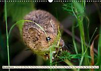 Kleiner Nager - Maus (Wandkalender 2019 DIN A3 quer) - Produktdetailbild 11