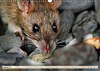 Kleiner Nager - Maus (Wandkalender 2019 DIN A3 quer) - Produktdetailbild 8
