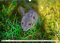 Kleiner Nager - Maus (Wandkalender 2019 DIN A3 quer) - Produktdetailbild 3