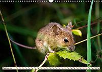 Kleiner Nager - Maus (Wandkalender 2019 DIN A3 quer) - Produktdetailbild 2