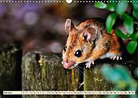 Kleiner Nager - Maus (Wandkalender 2019 DIN A3 quer) - Produktdetailbild 7