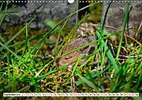Kleiner Nager - Maus (Wandkalender 2019 DIN A3 quer) - Produktdetailbild 9