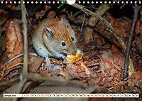 Kleiner Nager - Maus (Wandkalender 2019 DIN A4 quer) - Produktdetailbild 1