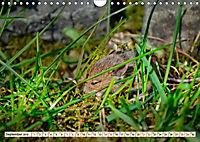 Kleiner Nager - Maus (Wandkalender 2019 DIN A4 quer) - Produktdetailbild 9