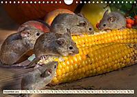 Kleiner Nager - Maus (Wandkalender 2019 DIN A4 quer) - Produktdetailbild 12