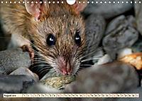 Kleiner Nager - Maus (Wandkalender 2019 DIN A4 quer) - Produktdetailbild 8