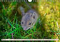 Kleiner Nager - Maus (Wandkalender 2019 DIN A4 quer) - Produktdetailbild 3
