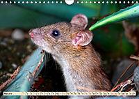 Kleiner Nager - Maus (Wandkalender 2019 DIN A4 quer) - Produktdetailbild 5