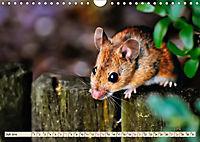Kleiner Nager - Maus (Wandkalender 2019 DIN A4 quer) - Produktdetailbild 7