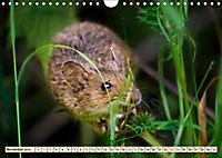 Kleiner Nager - Maus (Wandkalender 2019 DIN A4 quer) - Produktdetailbild 11