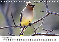 KLIMAWANDEL Anpassung der Vögel (Tischkalender 2019 DIN A5 quer) - Produktdetailbild 9