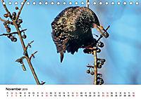 KLIMAWANDEL Anpassung der Vögel (Tischkalender 2019 DIN A5 quer) - Produktdetailbild 11