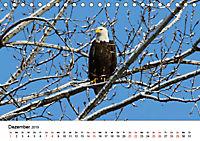 KLIMAWANDEL Anpassung der Vögel (Tischkalender 2019 DIN A5 quer) - Produktdetailbild 12