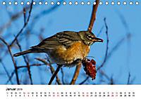 KLIMAWANDEL Anpassung der Vögel (Tischkalender 2019 DIN A5 quer) - Produktdetailbild 1