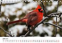 KLIMAWANDEL Anpassung der Vögel (Tischkalender 2019 DIN A5 quer) - Produktdetailbild 6