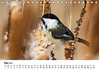 KLIMAWANDEL Anpassung der Vögel (Tischkalender 2019 DIN A5 quer) - Produktdetailbild 5