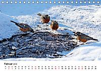 KLIMAWANDEL Anpassung der Vögel (Tischkalender 2019 DIN A5 quer) - Produktdetailbild 2