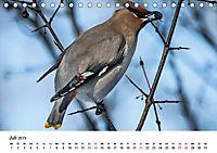 KLIMAWANDEL Anpassung der Vögel (Tischkalender 2019 DIN A5 quer) - Produktdetailbild 7