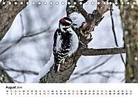 KLIMAWANDEL Anpassung der Vögel (Tischkalender 2019 DIN A5 quer) - Produktdetailbild 8