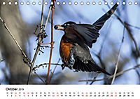KLIMAWANDEL Anpassung der Vögel (Tischkalender 2019 DIN A5 quer) - Produktdetailbild 10