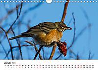 KLIMAWANDEL Anpassung der Vögel (Wandkalender 2019 DIN A4 quer) - Produktdetailbild 1