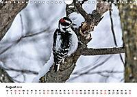 KLIMAWANDEL Anpassung der Vögel (Wandkalender 2019 DIN A4 quer) - Produktdetailbild 8