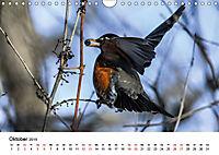 KLIMAWANDEL Anpassung der Vögel (Wandkalender 2019 DIN A4 quer) - Produktdetailbild 10