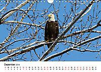KLIMAWANDEL Anpassung der Vögel (Wandkalender 2019 DIN A4 quer) - Produktdetailbild 12