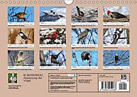 KLIMAWANDEL Anpassung der Vögel (Wandkalender 2019 DIN A4 quer) - Produktdetailbild 13